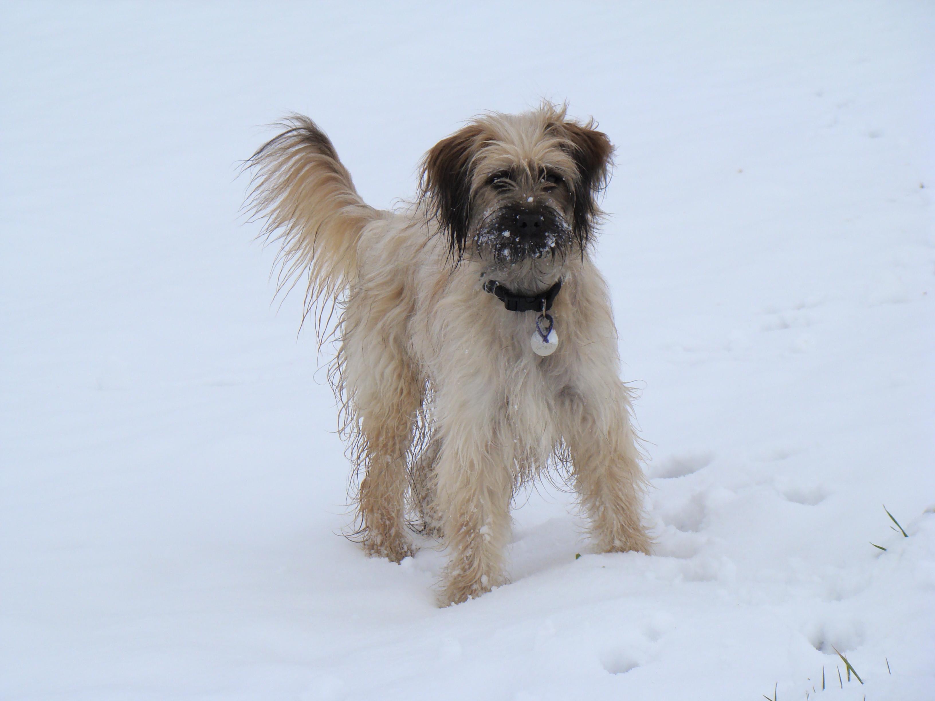 DeeDee 1st Snow
