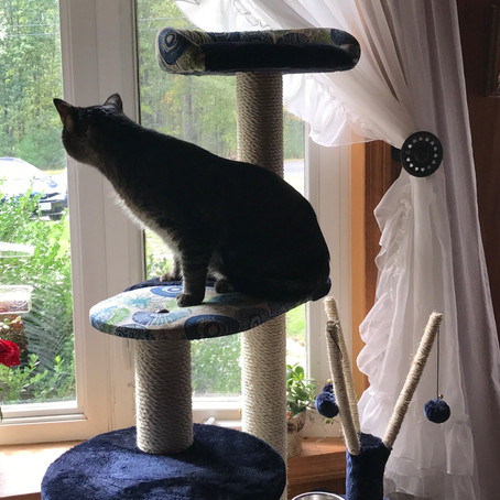 MidWest Feline Nuvo Playhouse 61.5-inch Cat Tree Review