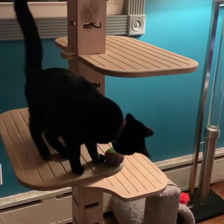 Playing with Baybus ❤️#cats #catsvideo #