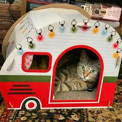 Getting festive. #cats#contentedcats#cat