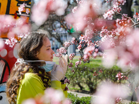 Does 'Tree Hugging' really help Mental Wellbeing?