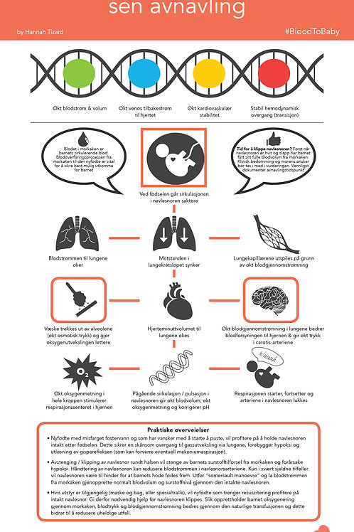 BloodtoBaby Physiology Infographic Norwegian DIGITAL