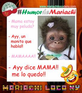 Humor de Mariachi chiste Monito Mariachi