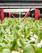 green-line-hydroponics philly.jpg