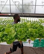 Urban Hydro Farmer.jpg