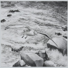 Seascape Drawings