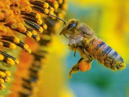 Le miel de Crète : des propriétés naturelles hors du commun, grâce à un environnement unique.