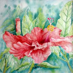 Grand hibiscus rouge