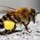 Thumbnail: Pollen d'abeilles (250 mg)