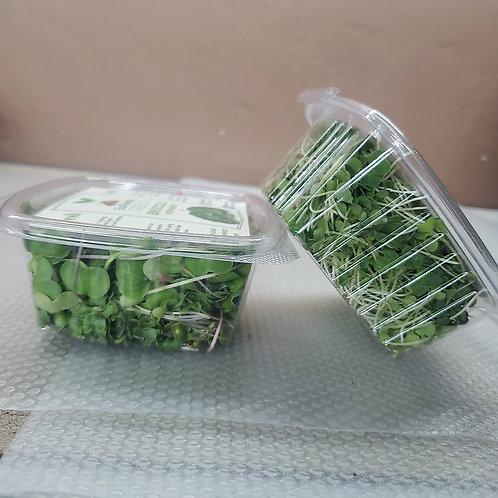 4 week Radish Microgreen subscription