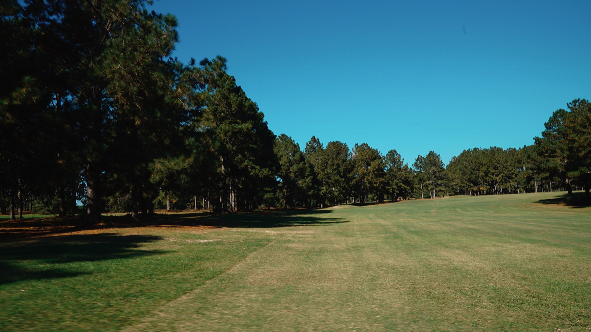 Wanee Lake Golf & RV Park, Pine Trees, s