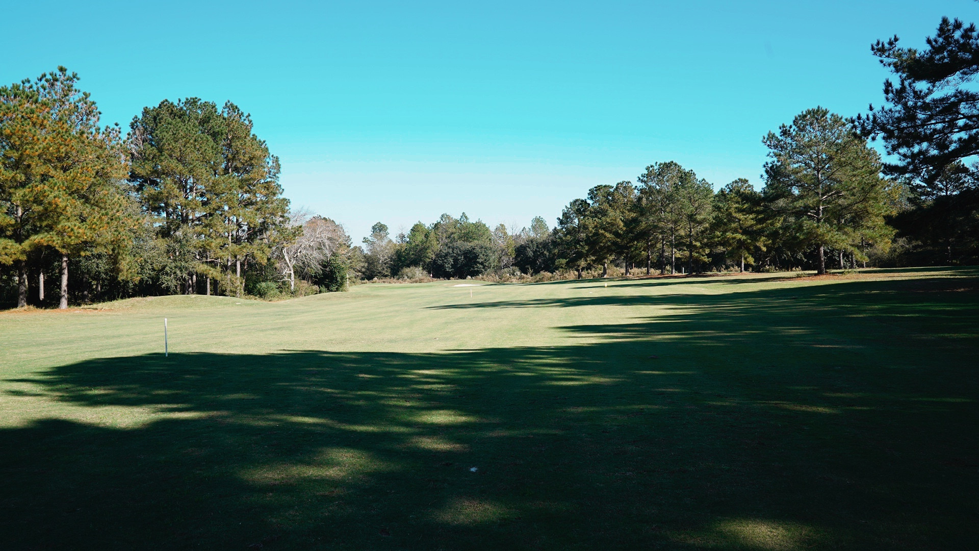 Wanee Lake Golf & RV Park, Pine Trees, g