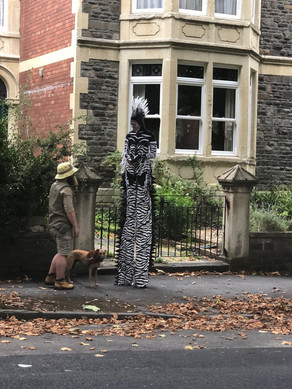 Zebra in Totterdown.jpg