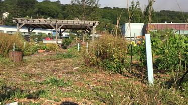 organic school teaching garden