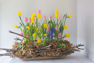 Hyacinth, daffodils and 'Nepia' and 'fir