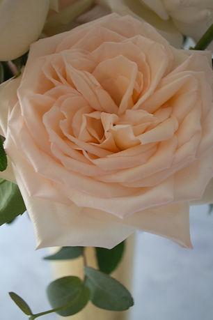 Rosa Princess Maya.jpg