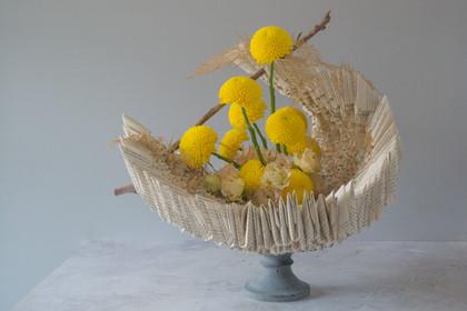'Borg' chrysanthmum, 'Alissa Light Apric