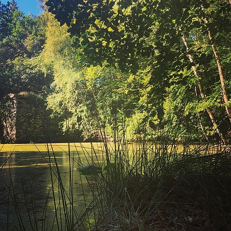 Woodland 3.jpg