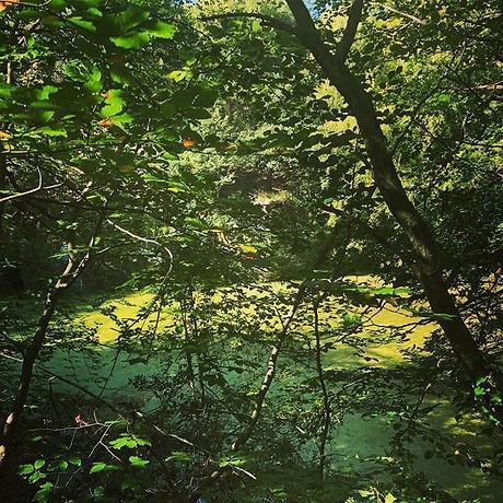 Woodland 4.jpg