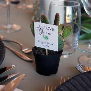 Mini Cacti Let Love Grow Thank you Signs