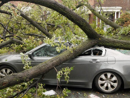 Как возместить ущерб, если на автомобиль упало дерево?