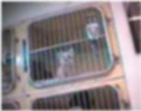 puppymill.jpg