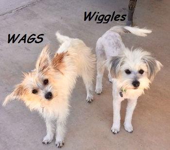 wiggleswags3.jpg