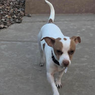 Scout needs a foster
