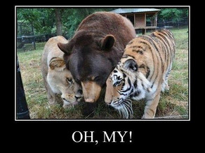 Lions, and Tigers, and Bears- OH MY!