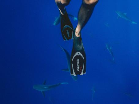 Nadadeira ou pé de pato: qual desses é o verdadeiro equipamento de mergulho?