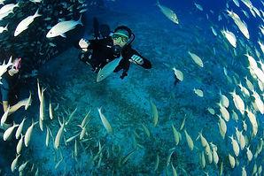 Curso Básico Open Water RJ