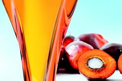Palm Oil Crude & Refined