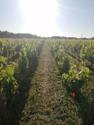 Des nouvelles du vignoble au Château Sénéjac