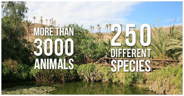 oasis species.jpg