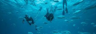 Diving Fuerte charter.21jpg.jpg
