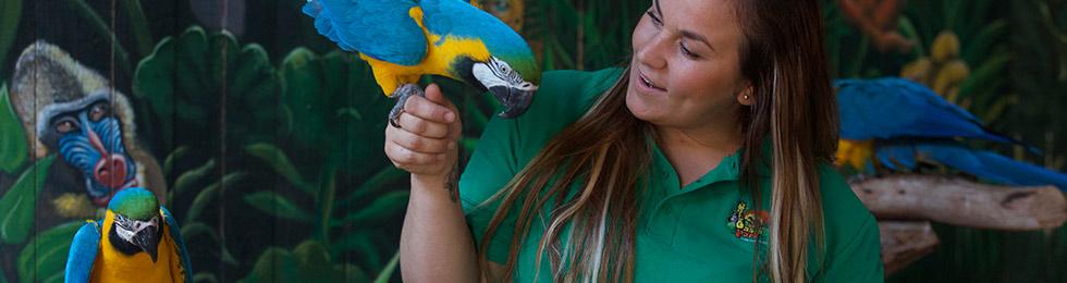 parrotsoasis