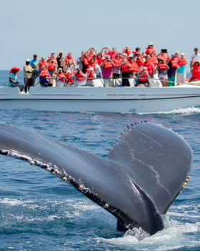 Dolphin and Whale watching Fuerteventura