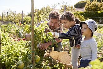 Accueil Jardinage