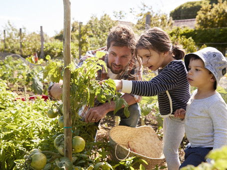 The Health Benefits of Gardening