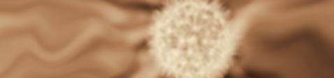 dandelion-1-Edit.JPG