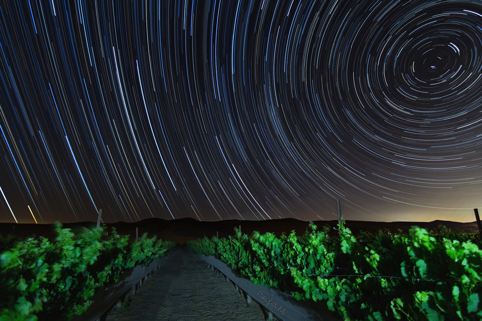 Vines and stars