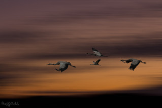 Cranes flyby