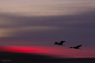 Cranes at take off