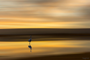 The lonely Crane