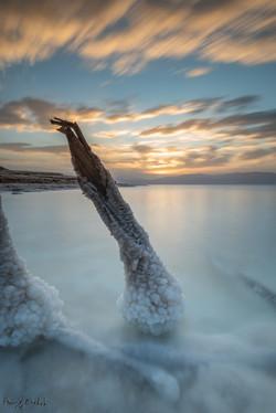 The salt tree