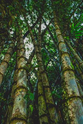 Allpa Bambú 5