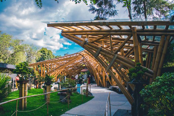 Allpa Bambú 3