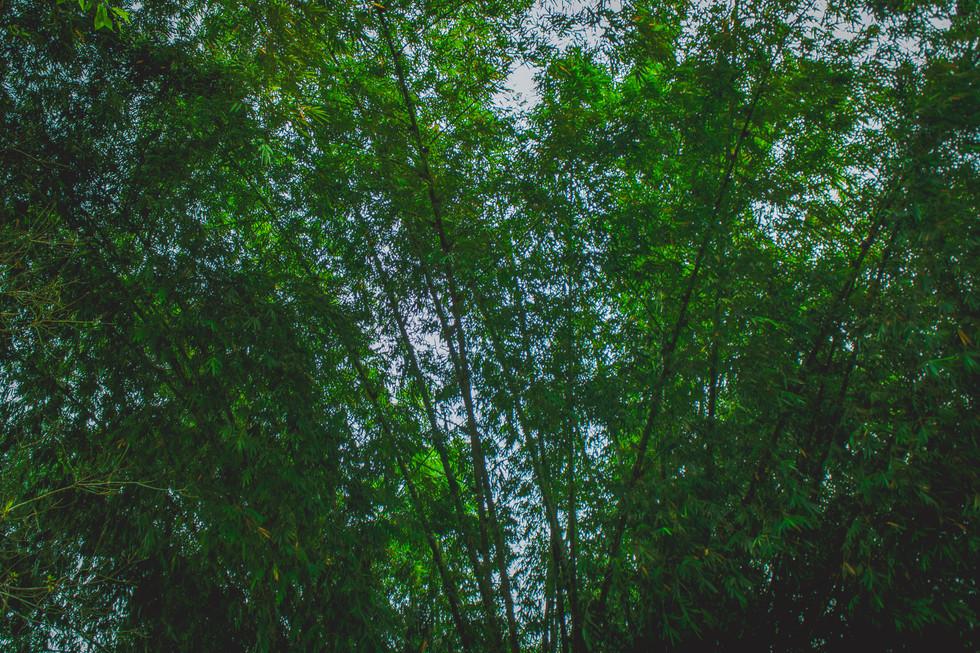 Allpa Bambú 6