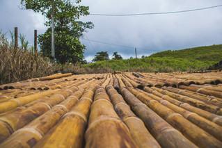 Allpa Bambú 1