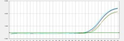 QPCR graph.jpg